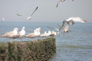 Vliegende meeuwen bij het strand