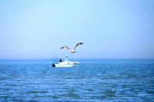 Meeuw boven de oceaan